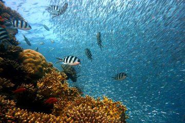 des poissons dans la mer